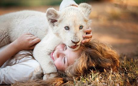 ミアとホワイトライオン 奇跡の1300日 ミアとホワイトライオン 奇跡の1300日