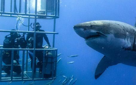 顫慄汪洋3 Cage Dive