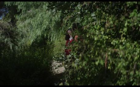 愛戰樹林 Amor eterno