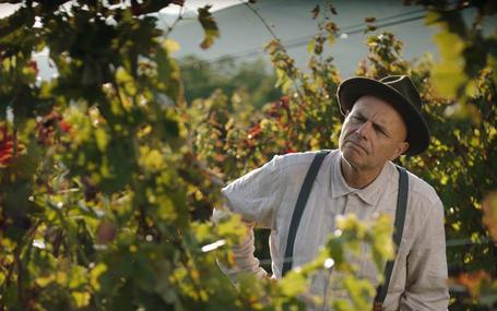 와인 패밀리 From the Vine