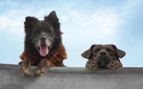 犬犬風塵 Los Reyes