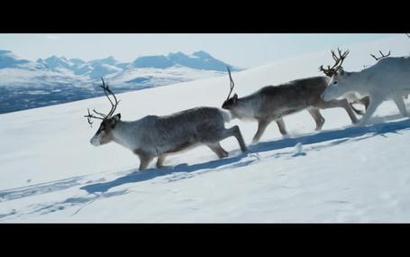 라플란드의 아일로 Ailo's Journey, Aïlo: Une odyssée en Laponie