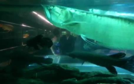 冰冷熱帶魚 冷たい熱帯魚