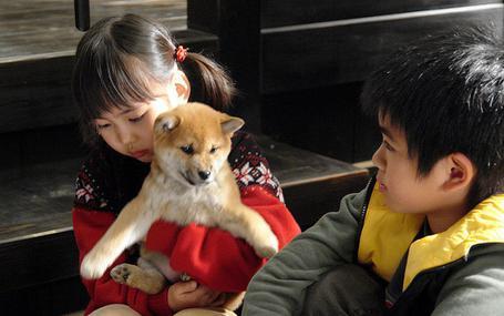 愛犬的奇蹟 マリと子犬の物語