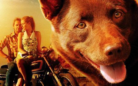 紅犬歷險記 Red Dog